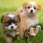 Dogs & Cats Puzzles for kids & toddlers 2 🐱🐩 v2021.48