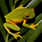 Frogs Jigsaw Puzzles2.10.7