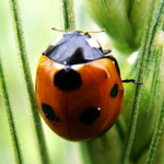 Insects Jigsaw Puzzles2.10.7